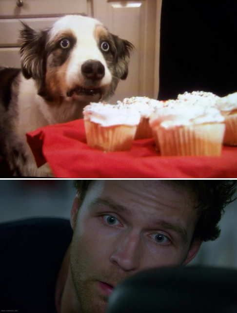 dean ambrose lockdown stains the cupcake dog